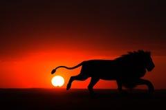 Maschio Lion Sunset Illustration dell'Africa Immagine Stock Libera da Diritti