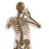 Maschio umano trasparente illustrazione di stock