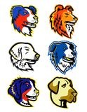 Sheepdogs Head Mascot Collection. Mascot icon illustration of head of different types of sheepdogs like the Anatolian Shepherd dog,  Australian Shepherd, Bernese Royalty Free Stock Photo