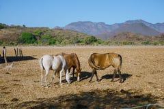 Mascota Халиско Мексика, ландшафт где интегрируют лошадей и природу стоковое фото rf