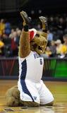 Mascota de la universidad de Villanova - gatos monteses Fotografía de archivo libre de regalías