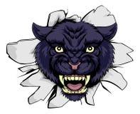 Mascota de los deportes de la pantera negra Imagen de archivo