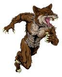 Mascota de los deportes del coyote Imagen de archivo