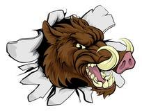 Mascota de los deportes del Razorback del verraco Fotos de archivo libres de regalías
