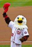 Mascota de los nacionales de Washington del chillido Imagen de archivo libre de regalías