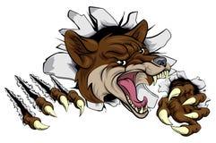 Mascota del coyote que rasga hacia fuera Imágenes de archivo libres de regalías