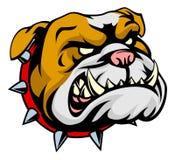 Mascota del dogo Imagen de archivo