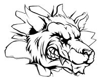 Mascota del lobo que se rompe a través de la pared Foto de archivo libre de regalías