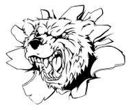 Mascota del oso que se rompe a través de la pared Imagenes de archivo