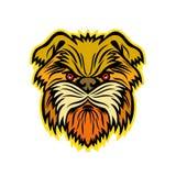 Mascota del perro de mono del Affenpinscher Fotos de archivo libres de regalías