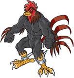 Mascota muscular del gallo de la historieta Scowling Imagen de archivo