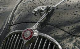 Mascote da capota de Jaguar Imagens de Stock Royalty Free