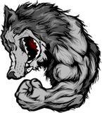 Mascote do lobo que flexiona desenhos animados do braço Imagem de Stock Royalty Free