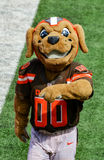 A mascote do NFL Chomps Cleveland Browns Imagem de Stock Royalty Free