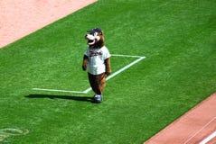 Mascote do urso dos gêmeos de Minnesota Imagem de Stock