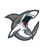 Mascote irritada do tubarão Fotos de Stock