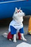 A mascote viva oficial do campeonato do mundo 2018 de FIFA e da FIFA Imagens de Stock Royalty Free