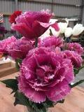 Mascott double tulips. Purple mascott double tulips in vase inside flower shop Stock Photography