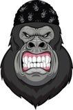 Mascotte capa della scimmia illustrazione di stock