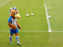 Mascotte, Colchester United FC, Inghilterra fotografie stock libere da diritti