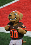 Mascotte de Cleveland Ohio NFL de mastications bruyantes Cleveland Browns Photographie stock libre de droits
