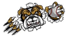 Mascotte de sports de base-ball de bouledogue Photos stock