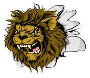 Mascotte del leone che attacca tramite la parete Immagine Stock Libera da Diritti