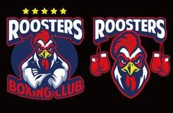 Mascotte del pollo del club di pugilato royalty illustrazione gratis