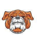 Mascotte Logo Head dell'illustrazione di vettore del bulldog Fotografie Stock Libere da Diritti