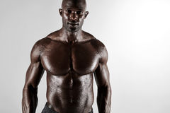 Masculine young african male model posing shirtless Royalty Free Stock Photos