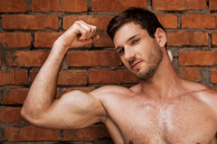 Masculinity. Handsome young muscular man posing while standing against brick wall Stock Image