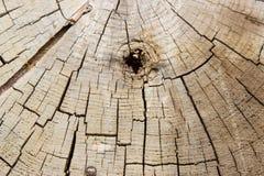 Masern Sie das alte Holz des Hintergrundes, das vom Ende einer Kettensäge gesägt wird Stockfotos