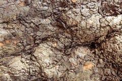 Masern Sie der Hintergrund-Ergebnisse der Baumrindebeschaffenheit alte graue braune Eiche sehr Stockbild
