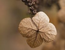 Masern Sie Details der trockenen Blume im Winter stockfoto