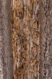 Masern Sie die alte Baumrinde Malerischer Sprung Stockbild