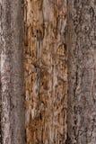 Masern Sie die alte Baumrinde Malerischer Sprung Lizenzfreie Stockbilder