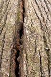 Masern Sie die alte Baumrinde Malerischer Sprung Stockfoto