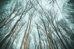 Masern Sie Hintergrund, Baum ohne Blätter gegen den Himmel Stockfoto