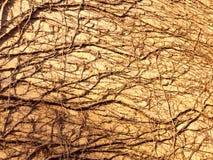 masern Sie im Sonnenlicht von den Baumreben auf Wandseiten-Ziegelsteinhaus Stockfotografie