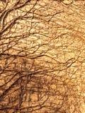 masern Sie im Sonnenlicht von den Baumreben auf Wandseiten-Ziegelsteinhaus Lizenzfreie Stockfotografie