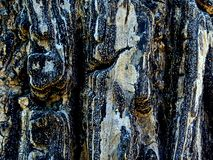 Masern Sie Oberfläche der Baumrinde stockbilder