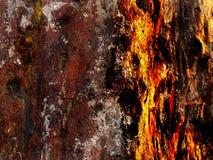 Masern Sie Oberfläche der Baumrinde stockfotos
