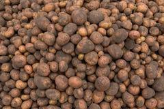 Masert viel von frischen Kartoffeln mit Boden auf Oberteil geerntetem f Stockbilder