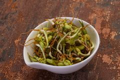 Mash bean sprout. In the bowl stock photos