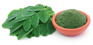 Mashed Moringa leaves in a pottery Royalty Free Stock Images
