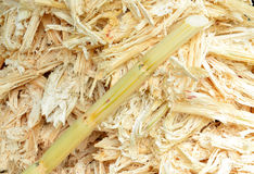 The mashed sugarcane Stock Images