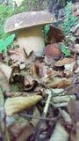 Mashroms леса стоковые изображения rf