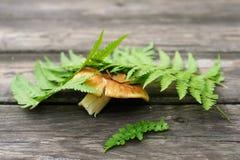 Mashroom de Porchino bajo licencia verde del helecho en la tabla de madera Fotografía de archivo libre de regalías
