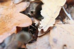 Mashroom del bambino sotto le foglie Fotografia Stock