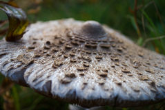 Mashroom with early drew. In forest high up Carpathians mountains Royalty Free Stock Photos